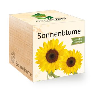 Sonnenblume im Holzwürfel