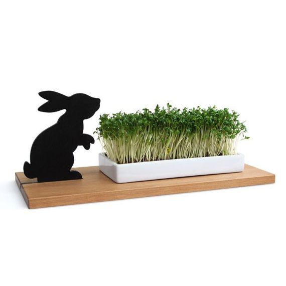 Kresseschale smart ´n´ green - Hase - Bild
