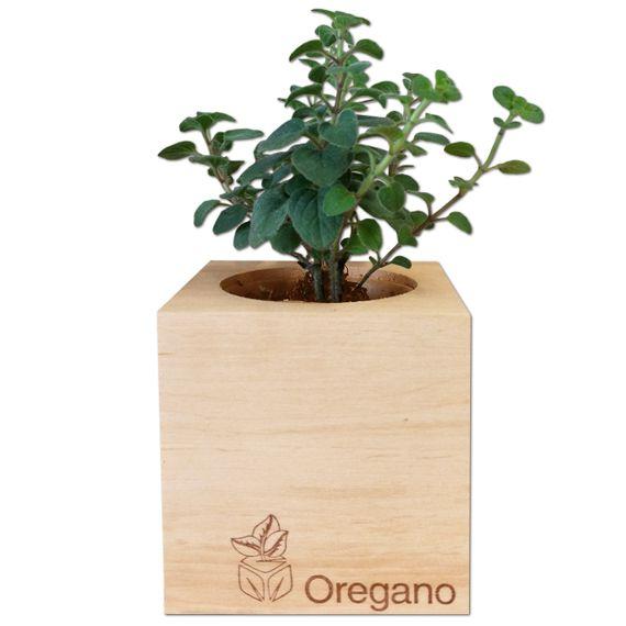 Oregano im Holzwürfel - Bild 2