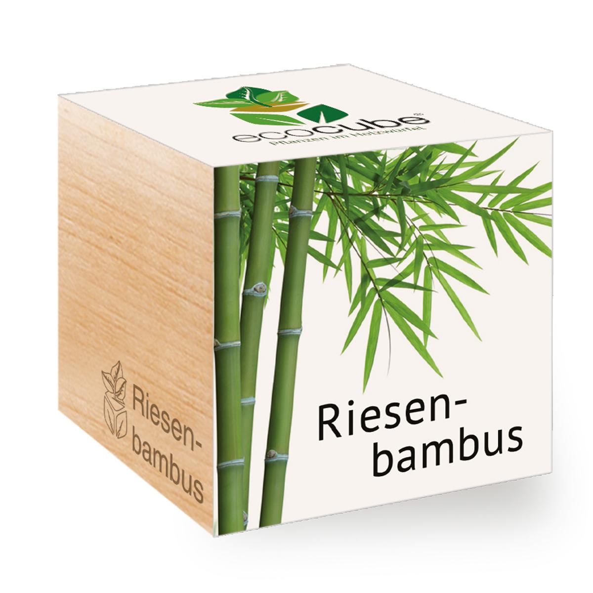 Riesenbambus im Holzwürfel von Ecocube