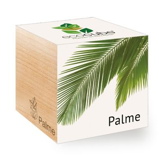 Palme im Holzwürfel