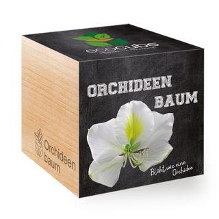 Orchideenbaum im Holzwürfel