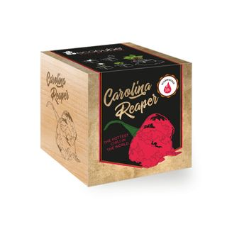 "Chilipflanze ""Carolina Reaper"" im Holzwürfel - Chili Selection"