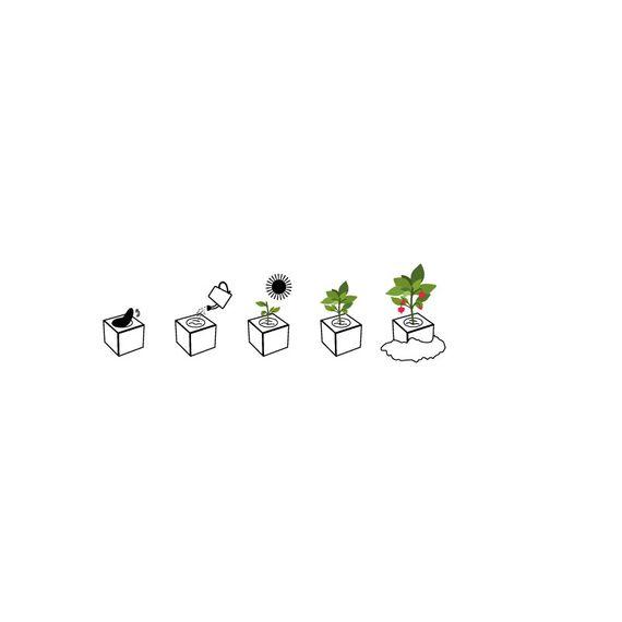 "Chilipflanze ""Tabasco"" im Holzwürfel - Chili Selection - Bild 2"