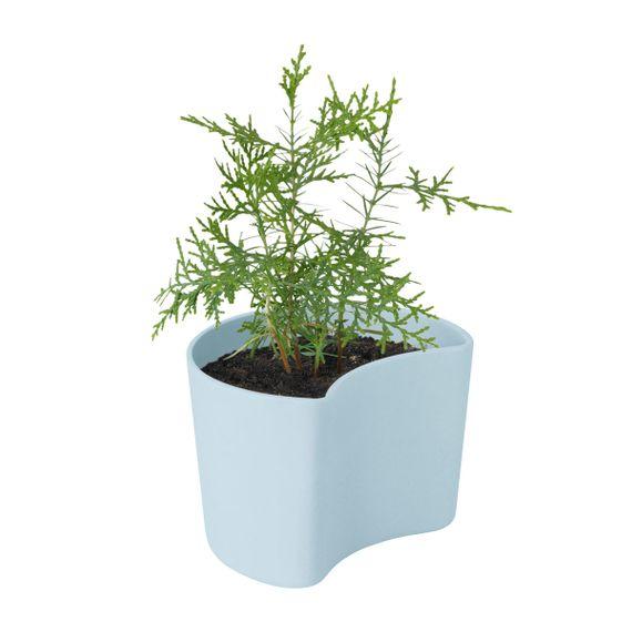 Blumentopf YOUR TREE - mit Samen, biologisch abbaubar - Bild 9